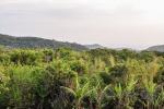 20160418-Costa-Rica-Monteverde-03.jpg