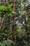 20160419-Costa-Rica-Monteverde-10.jpg