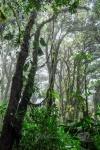 20160419-Costa-Rica-Monteverde-14.jpg