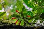 20160419-Costa-Rica-Monteverde-27.jpg