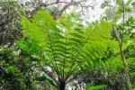 20160419-Costa-Rica-Monteverde-38.jpg