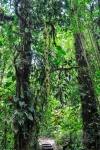 20160419-Costa-Rica-Monteverde-39.jpg