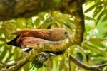 20160420-Costa-Rica-Monteverde-147.jpg