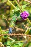 20160420-Costa-Rica-Monteverde-73.jpg