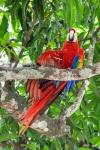 20160516-Costa-Rica-Nosara-to-Manuel-Antonio-03.jpg