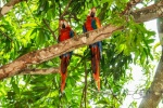 20160516-Costa-Rica-Nosara-to-Manuel-Antonio-07.jpg