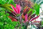 20160519-Costa-Rica-Corcovado-56.jpg
